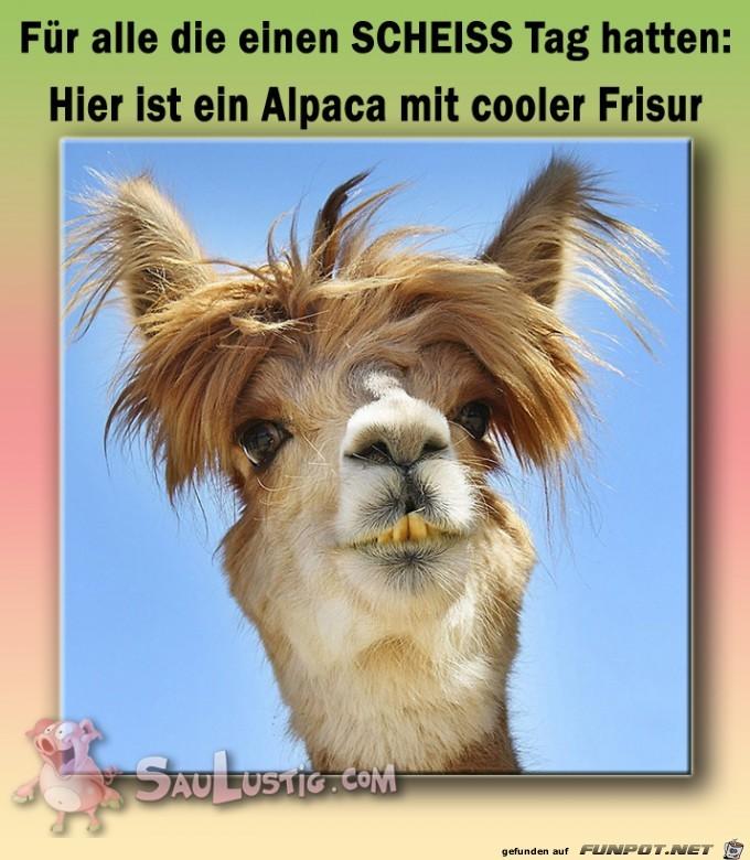Frisur Lustig