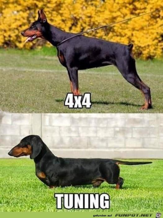 Getunter Hund