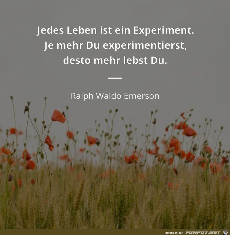 jedes Leben ist ein Experiment