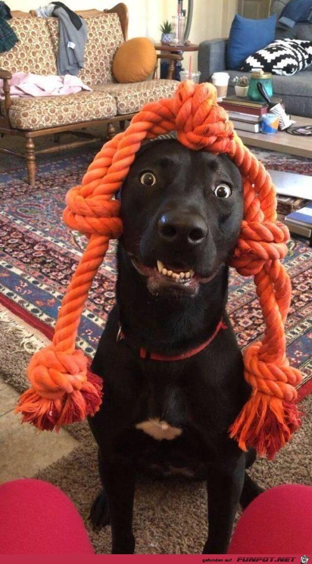 Dieser Hund sieht lustig aus