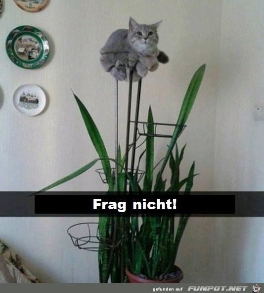 Ich bin eine Pflanze