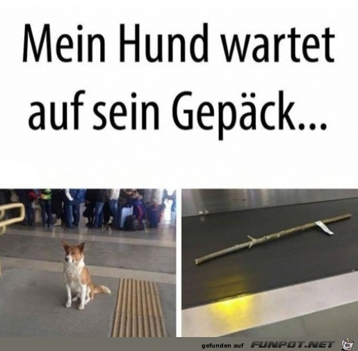 Hund wartet auf sein Gepäck