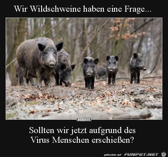 Verhalten der Wildschweine....
