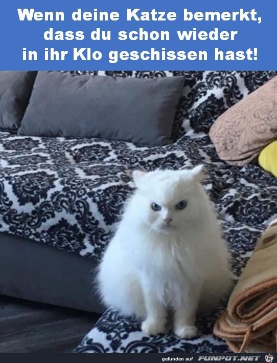 Katze-ist-empört.jpg auf www.funpot.net