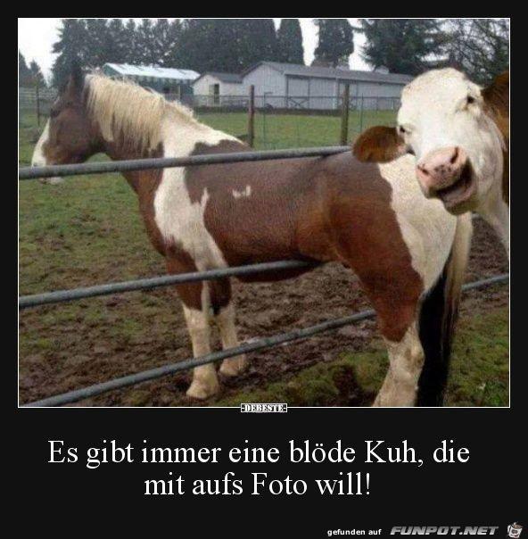 Es gibt immer eine blöde Kuh