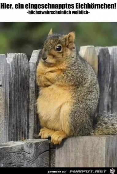 Ein eingeschnapptes Eichhörnchen