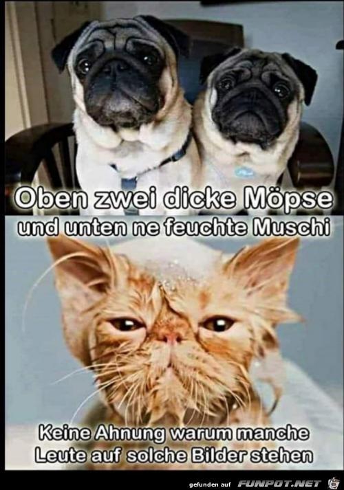 Möpse und Muschi