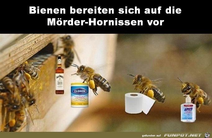 Bienen bereiten sich vor