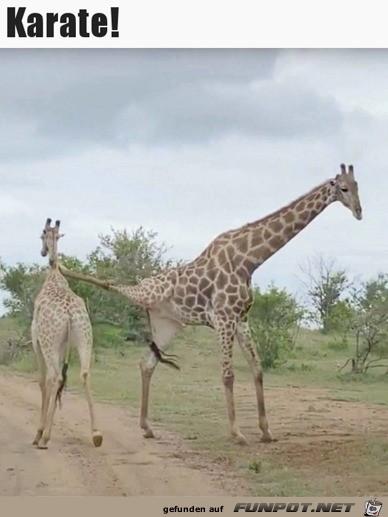 Giraffe-kann-Karate.jpg auf www.funpot.net