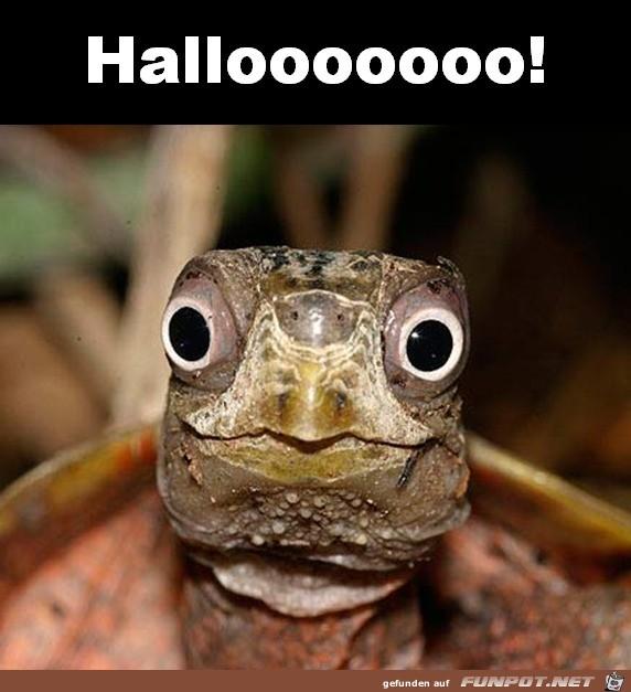 Halloooo