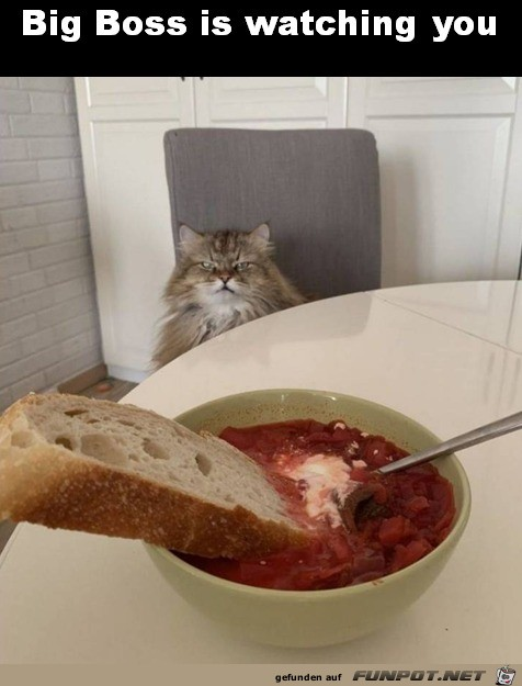 Katze beobachtet dich