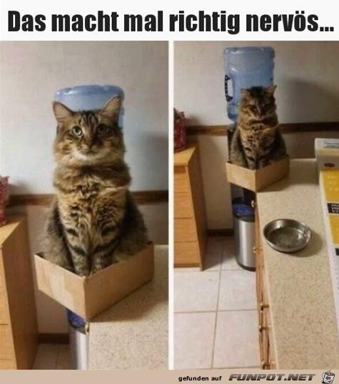 Diese Katze macht einen echt nervös