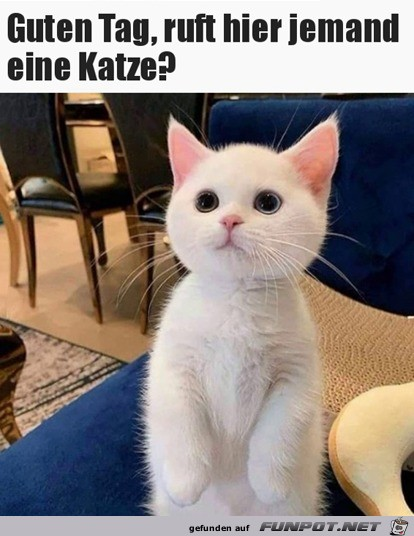 Ruft hier jemand eine Katze?