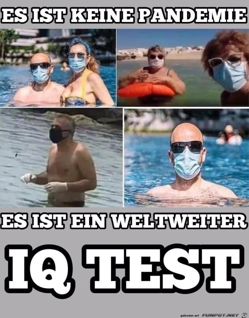 ein weltweiter IQ-Test