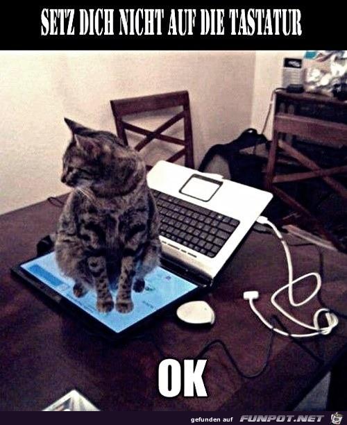 Setz dich nicht auf die Tastatur