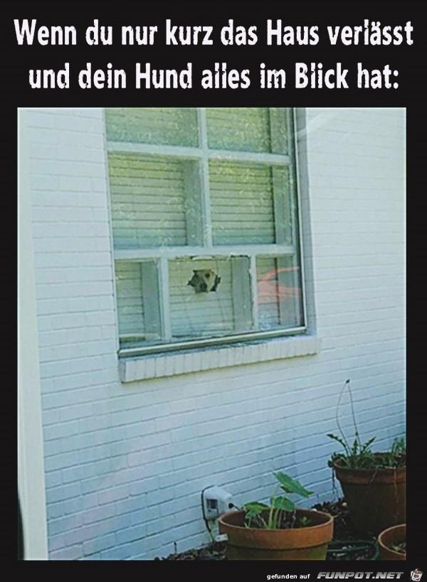 Hund hat alles im Blick