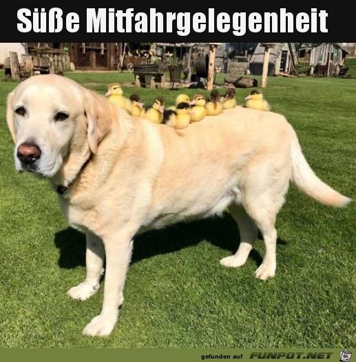 Gutes Hunde-Taxi