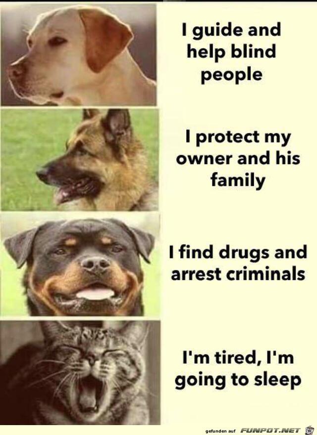 Unterschied zwischen Hund und Katze