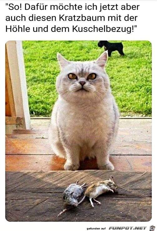 Katze - sie mal was ich dir mitgebracht habe