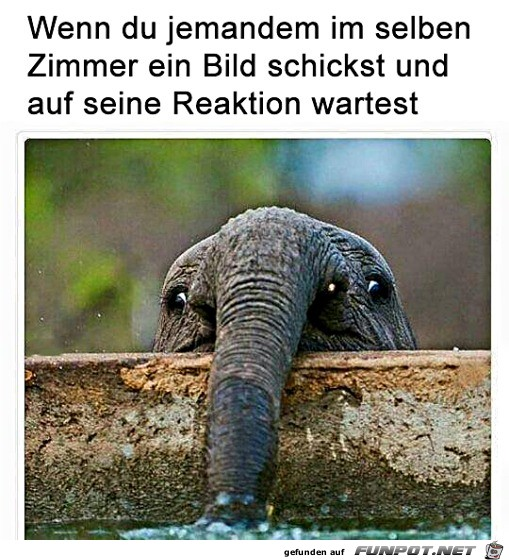 Witziger Elefant