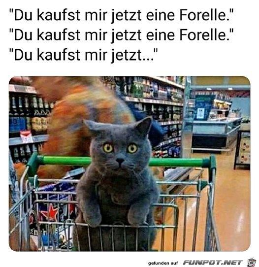 Katze will eine Forelle