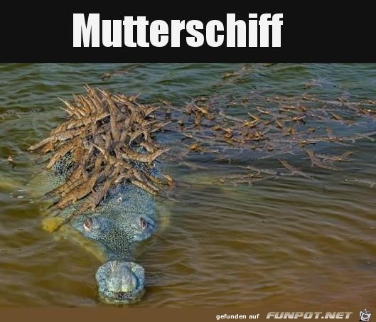Mutterschiff.jpg auf www.funpot.net