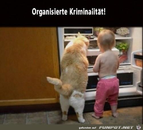 Das ist organisierte Kriminalität