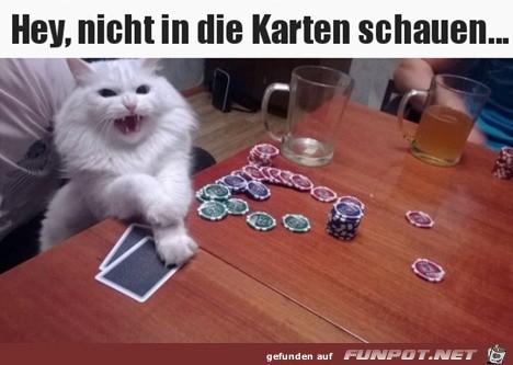 Katze spielt Karten