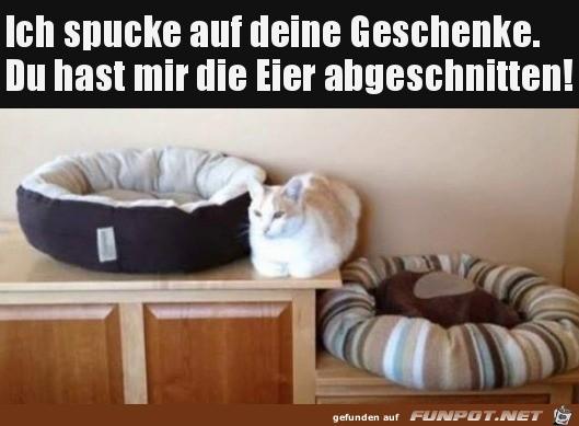 Katze will deine doofen Geschenke nicht