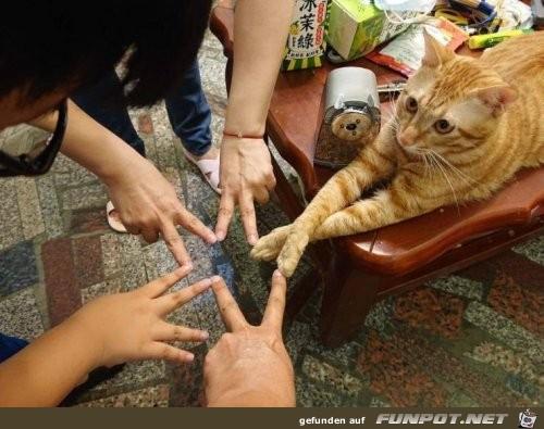 Finger berühren mit Katze