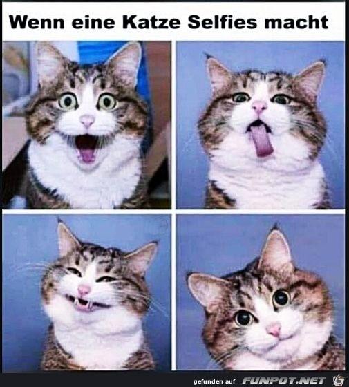 Katze macht Selfies