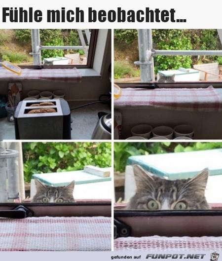 Ich fühle mich etwas beobachtet