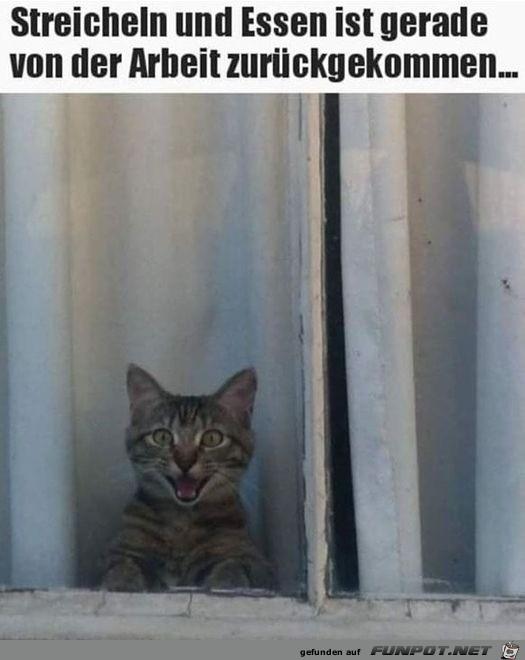 Katze freut sich