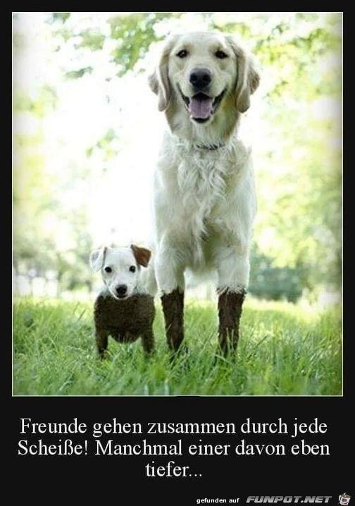 So sind Freunde
