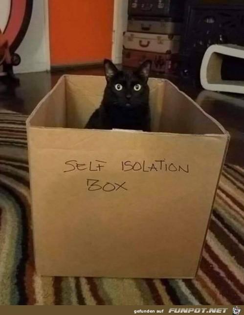 Quarantäne-Box für Katze
