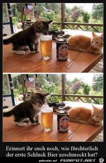 Der erste Schluck Bier