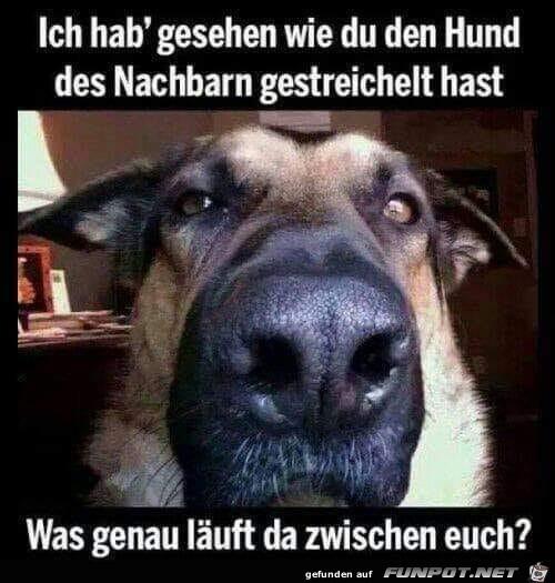 Anderen Hund gestreichelt