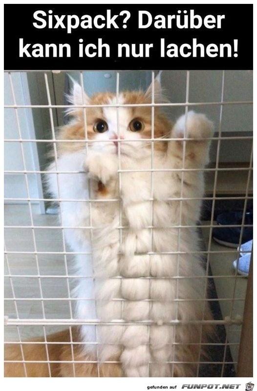 Katze hat mehr als ein Sixpack