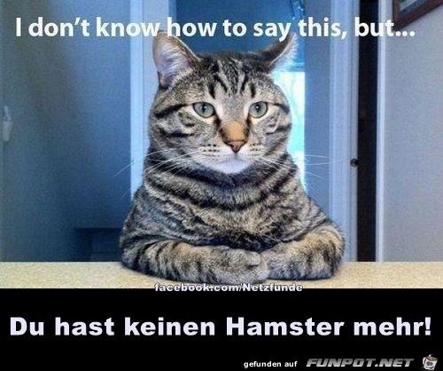 Katze hat Hamster gefressen