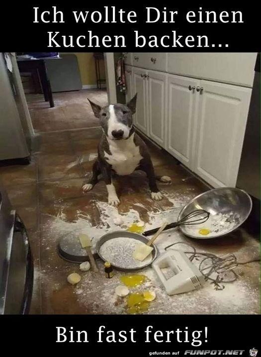 Hund wollte Kuchen backen