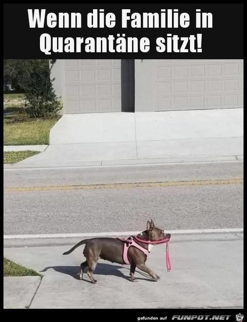 Hund geht alleine Gassi