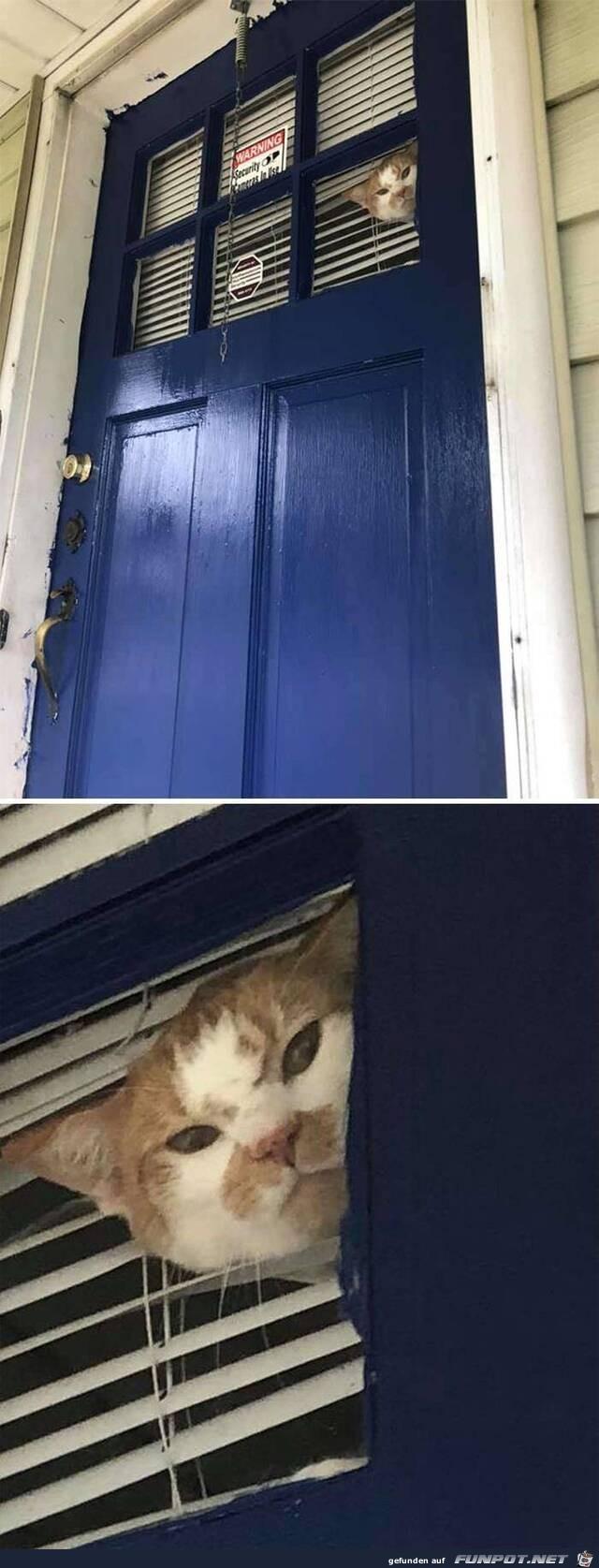 Katzen-Security
