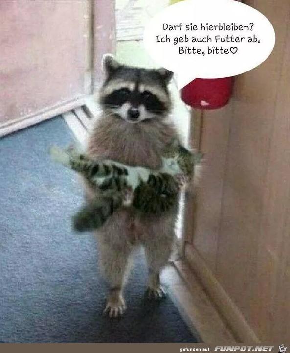 Darf die Katze hier bleiben?