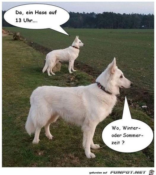Wo ist der Hase?