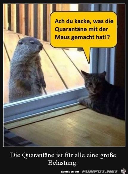 Die Maus hat sich aber verändert