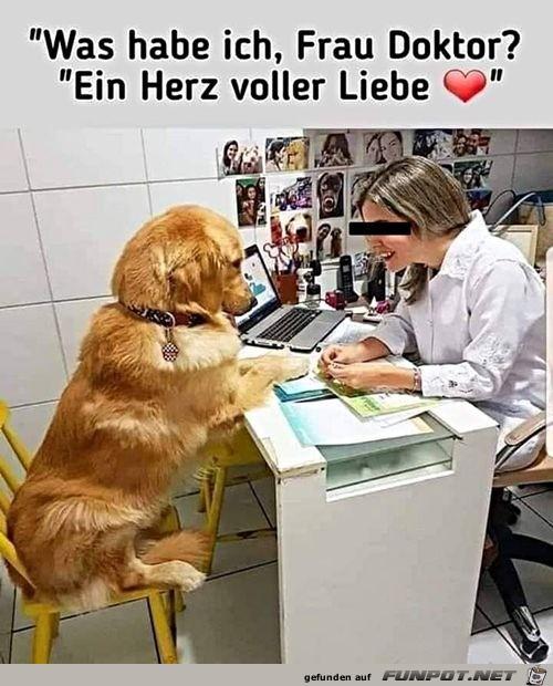 Hund will seine Diagnose wissen