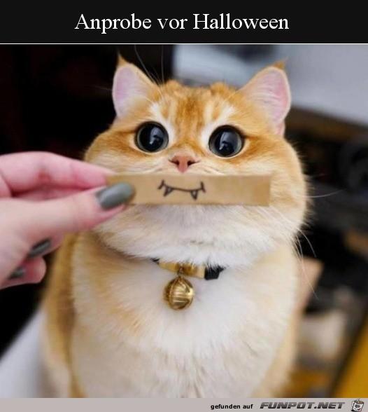 Probe für Halloween
