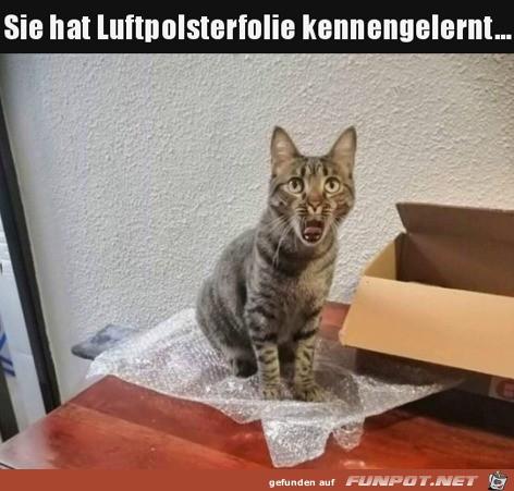 Luftpolsterfolie gefällt der Katze