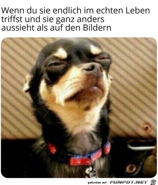 Hund mit lustigem Blick