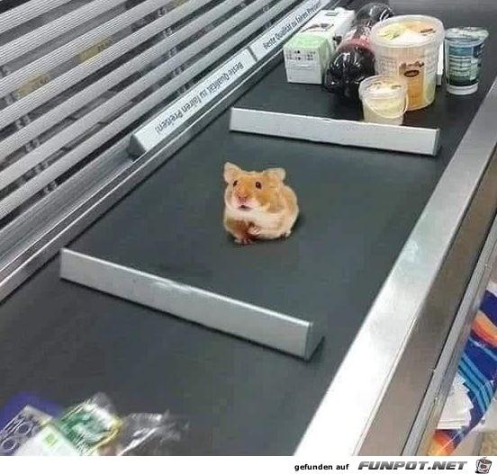 Einen Hamster für den Hamster